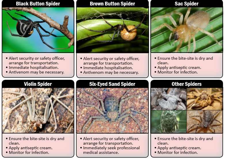 Spider Safety